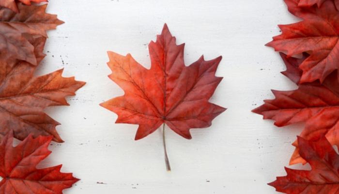 Oportunidad para estudiantes internacionales de Beca en Canadá