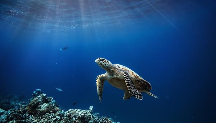 Voluntariado para proteger los ecosistemas marinos