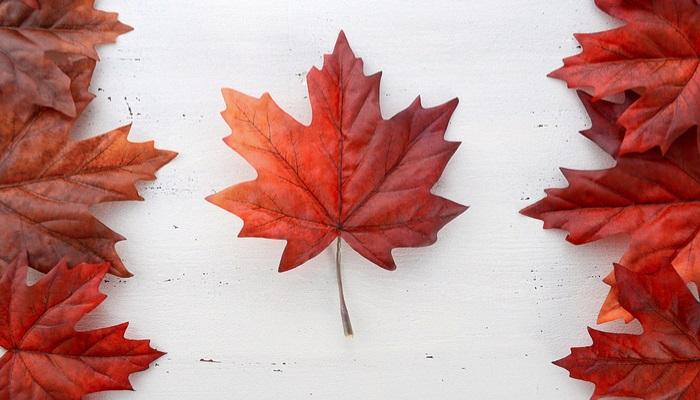 ¿Cómo y dónde hacer un voluntariado en Canadá?