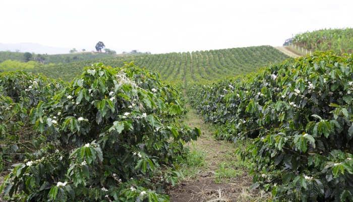 Voluntariado en granja para colombianos