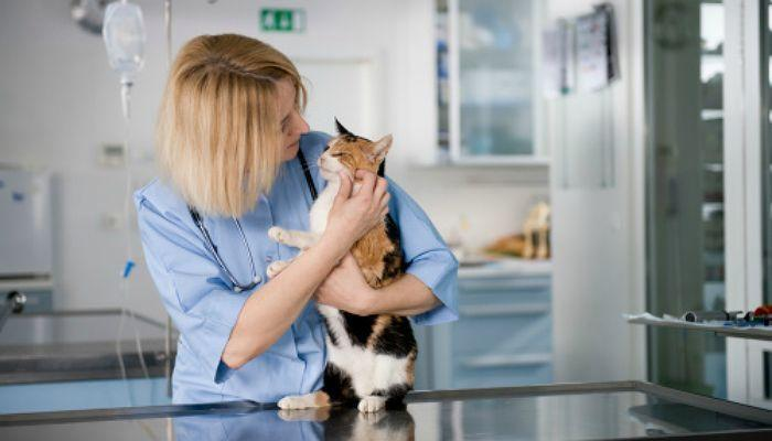 Curso de Auxiliar Técnico Veterinario: conviértete en pieza clave en la clínica veterinaria