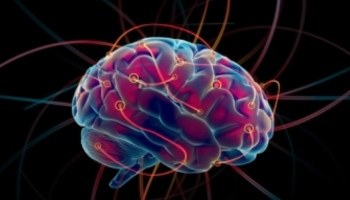 ¿El tamaño del cerebro importa?