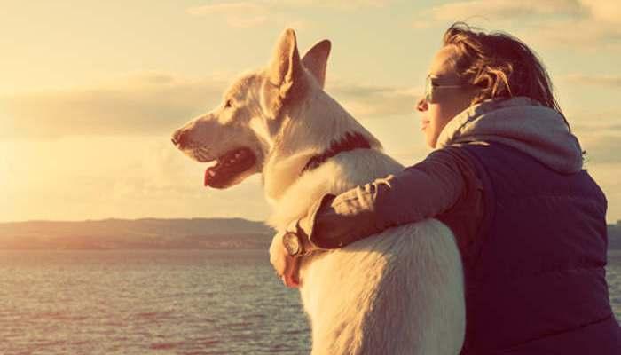 Mascotas y vida sana: una relación directamente proporcional