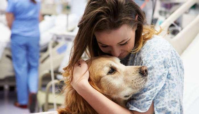 Los perros, héroes terapeutas de cuatro patas