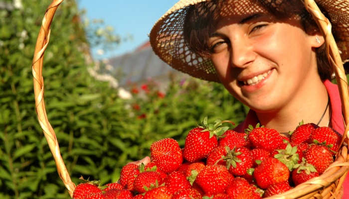 Casi 12.000 puestos de trabajo para la recolecta de la fresa en Huelva