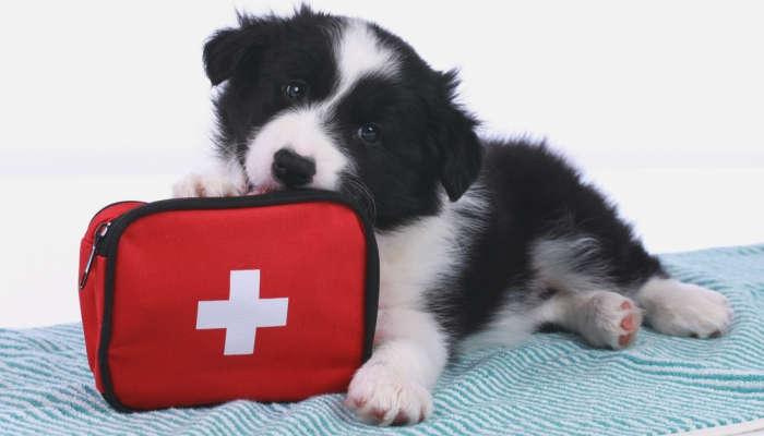 Cómo mejorar la vida de tu perro o gato: Curso de Cuidados y Primeros Auxilios