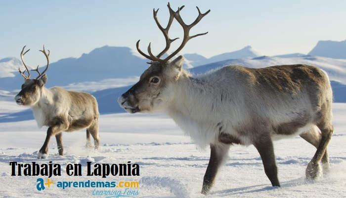 Trabaja en Laponia: Todo lo que debes saber para conseguir un empleo en la tierra de Santa Claus