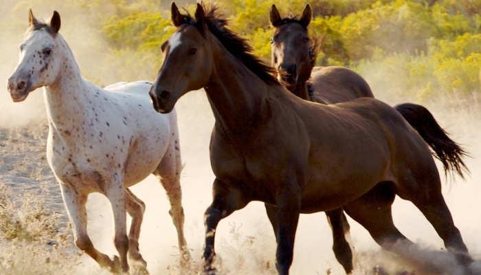 Trabajar con caballos: vacantes como guía, monitor y en el hipódromo