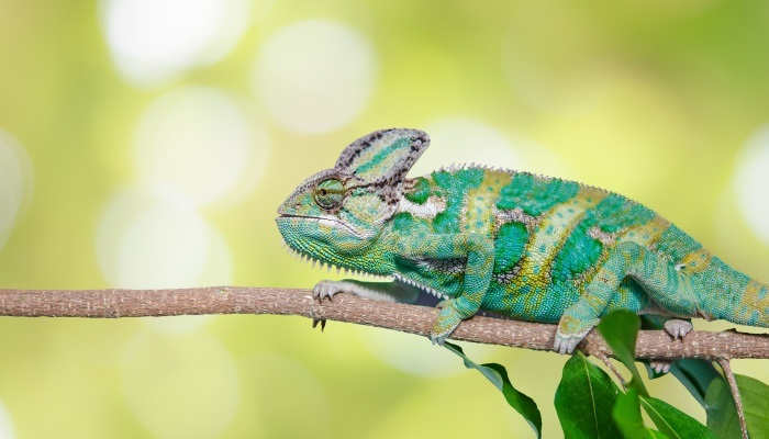 Un curso de Técnico Veterinario para el cuidado de animales exóticos y salvajes en Madrid