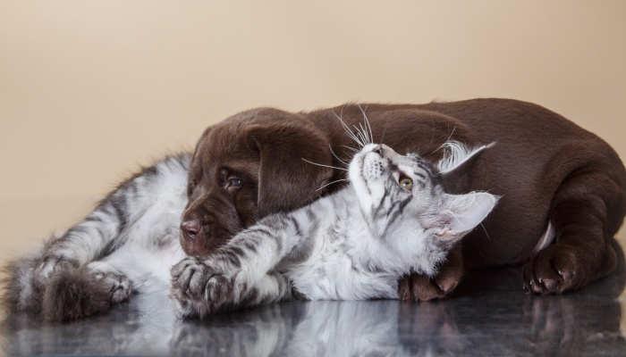 Curso especializado en cachorros: cuando formación y ternura se dan la mano